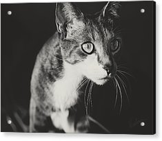 Ickis The Cat Acrylic Print by Kharisma Sommers