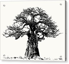 Iconic Baobab Tree In Black And White Acrylic Print