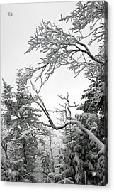 Icy Branches In The Adirondack Mountains Of New York Acrylic Print by Brendan Reals
