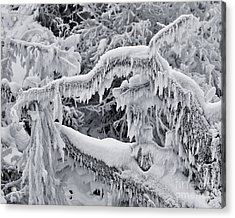Icy Breath Of The Frost Dragon Acrylic Print by Royce Howland