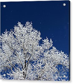 Icy Brilliance Acrylic Print