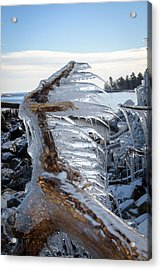 Icy Claw Acrylic Print by Jill Laudenslager