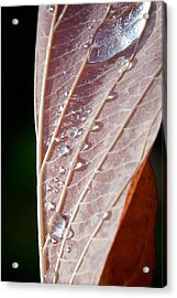 Icy Fall Morning Acrylic Print by Lisa Knechtel