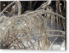 Icy Grass Acrylic Print