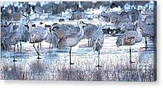 Icy Stroll Acrylic Print