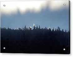 Icy Sunrise Acrylic Print