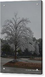 Icy Tree Acrylic Print by Gordon Mooneyhan