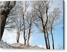 Icy Trees Acrylic Print