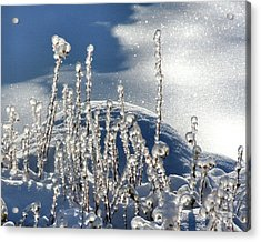 Acrylic Print featuring the photograph Icy World by Doris Potter