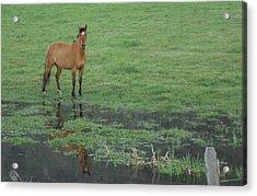 Idaho Farm Horse1 Acrylic Print by Cynthia Powell