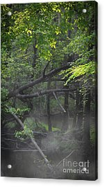 Acrylic Print featuring the photograph If A Tree Falls In The Woods by Skip Willits
