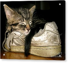 If The Shoe Fits Acrylic Print by Heather King