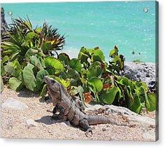 Iguana At Tulum Acrylic Print by Roupen  Baker