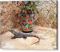 Acrylic Print featuring the photograph Iguana by Dianne Levy