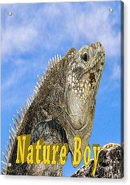 Iguana Nature Boy Acrylic Print by LeeAnn McLaneGoetz McLaneGoetzStudioLLCcom