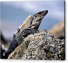 Acrylic Print featuring the photograph Iguana by Sally Weigand