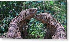 Iguanas  Acrylic Print by Betsy Knapp