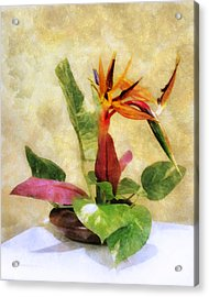 Ikebana Bird Of Paradise Acrylic Print by Francesa Miller