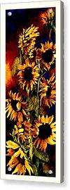 I'll Follow The Sun Acrylic Print by Mike Hill
