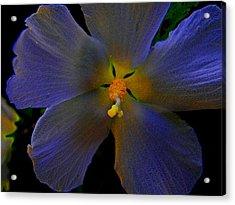 Illuminated Flower Acrylic Print by Martin Morehead