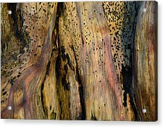 Illuminated Stump 02 Acrylic Print by Bruce Gourley