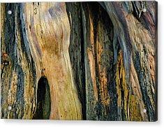 Illuminated Stump 03 Acrylic Print by Bruce Gourley