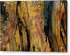 Illuminated Stump Acrylic Print by Bruce Gourley