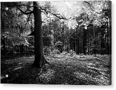 Acrylic Print featuring the photograph Illumination by Alexander Kunz