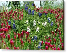 Illusions Of Texas In Red White Blue Acrylic Print by Robyn Stacey
