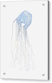 Illustration Of Box Jellyfish (cubozoa) Acrylic Print