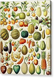 Illustration Of Fruit Acrylic Print
