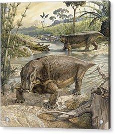 Illustration Of Lystrosaurus Acrylic Print by John Sibbick