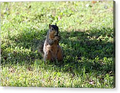 Im Eating Here Acrylic Print by Evelyn Patrick