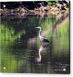 Im Fishing Acrylic Print by Robert Pearson