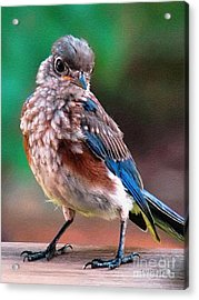 Acrylic Print featuring the photograph I'm New Around Here by Sue Melvin