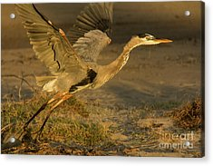 I'm Out Of Here Wildlife Art By Kaylyn Franks Acrylic Print