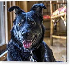 Ready When You Are Acrylic Print by Keith Armstrong