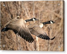 I'm Right Behind Ya Acrylic Print by Donna Kennedy