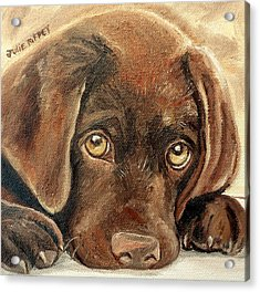 I'm Sorry - Chocolate Lab Puppy Acrylic Print