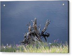Stump Chambers Lake Hwy 14 Co Acrylic Print