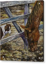 Im Watching You Acrylic Print by Laurie Tietjen