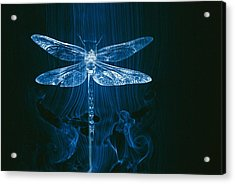 Imagery Of A Dragonfly In A Wind Tunnel Acrylic Print by Paul Chesley