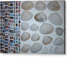 Images And Shells Acrylic Print by Biagio Civale