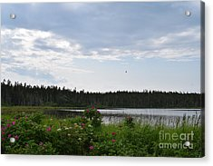 Images From Maine 2 Acrylic Print