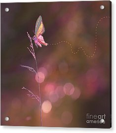 Imagine ... Believe It - 01a Acrylic Print by Variance Collections