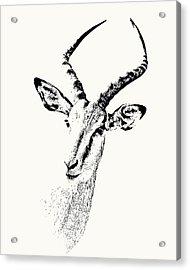 Impala Antelope Portrait Acrylic Print