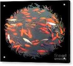 Imperial Koi Pond With Black Swirling Frame Acrylic Print by Carol Groenen