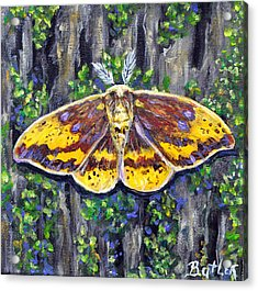 Imperial Moth Acrylic Print by Gail Butler