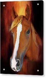 Imperial Pose Acrylic Print