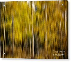 Impression Of Autumn Acrylic Print
